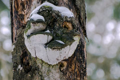 A portrait of a wood goblin on a tree trunk made of mushroom parasites wittyly modified by a woodpecker Stock Photo