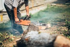 Portrait of worker, lumberjack cutting trees. Stock Photos