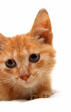 Portrait of wretched red small cat Royalty Free Stock Photos
