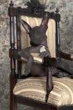 Portrait of xoloitzcuintle puppy. Portrait of Mexican xoloitzcuintle puppy posing on an antique chair Royalty Free Stock Photo