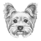 Portrait of Yorkshire Terrier Dog. Hand drawn illustration Royalty Free Stock Photos
