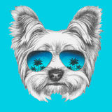 Portrait of Yorkshire Terrier Dog with mirror sunglasses. Hand drawn illustration Stock Photos