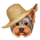 Portrait of Yorkshire Terrier Dog with straw hat. Hand-drawn illustration, digitally colored Royalty Free Stock Images