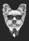 Portrait of Yorkshire Terrier in suit. Hand drawn illustration Stock Image