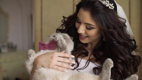 Portrait of the young adorable bride with charming smile and long dark curly hair playing with lovely cat with pink bow stock footage