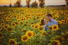 Portrait of Young adult  loving couple embracing and kissing in green and yellow agricultural sunflower field or meadow background Royalty Free Stock Photos
