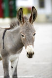 Portrait of a young african donkey Stock Photo