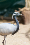 Portrait of a young African stork Stock Photo