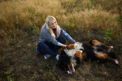 Young woman walking with Bernese Mountain Dog on the summer field. Portrait of a young athletic caucasian woman sitting and scratching the dog`s tummy. Bernese royalty free stock photography