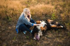 Young woman walking with Bernese Mountain Dog on the summer field. Portrait of a young athletic caucasian woman sitting and scratching the dog`s tummy. Bernese stock photos