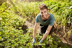 Portrait of young attractive bearded hispanic male gardener in blue t-shirt smiling in camera, working n garden, picking. Harvest, spending morning outdoors Stock Photo