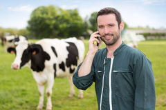Portrait of a young attractive farmer in a pasture with cows. View of a young attractive farmer in a pasture with cows royalty free stock photos