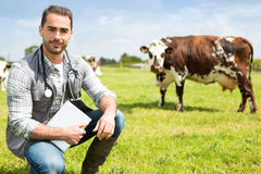 Portrait of a Young attractive veterinary in a pasture with cows Stock Photo