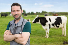 Portrait of a young attractive veterinary in a pasture with cows Royalty Free Stock Image