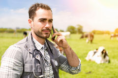 Portrait of a Young attractive veterinary in a pasture with cows. View of a Portrait of a Young attractive veterinary in a pasture with cows Stock Images