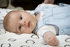 Portrait of young baby boy Royalty Free Stock Image