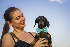 Portrait of a young beautiful girl and her dog dachshund in a blue bow, playing outdoor on the blue sky background.  stock images