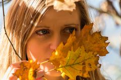 Portrait of young beautiful woman with autumn leaves.  royalty free stock photography