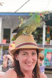 Portrait of a young beautiful woman with a green macaw standing over her hat in a nice bar in Bocas del Toro harbor. Colon Island, Panama Stock Images