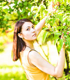 Portrait of young beautiful woman in spring blossom trees Stock Photos