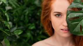 Portrait of young and beautiful woman in tropical leaves. Beautiful redhead girl with freckles posing with monstera leaf, copy space stock photography