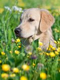 Portrait young beauty dog Stock Image