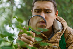 Portrait of young botanist with magnifying glass. In forest on summer day Royalty Free Stock Photo