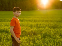 Portrait of an Young boy in the field on the sunset Stock Image