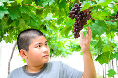 Portrait of young boy with grapes. Stock Photos
