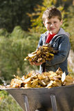 Portrait of young boy holding leaves near wheelbarrow Royalty Free Stock Photo