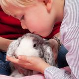 Portrait of a scandinavian young boy in studio with a rabbit royalty free stock photo
