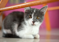Portrait of young cat Stock Images