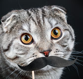 Portrait of a young cat with paper mustaches Stock Photography