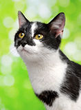 Portrait of a young cats Stock Image