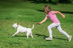 Girl chasing a dog in a park. Portrait of a young caucasian girl chasing small dog who caught tennis ball royalty free stock images