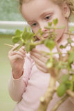 Little girl making leafs cleaning using small brush Stock Photography