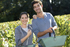 Portrait of young couple with baskets of grapes Stock Image