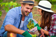 Portrait young couple in vineyard during harvest season Stock Photos