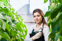 Portrait of young female biotechinican Stock Image