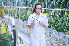 Female Scientist Taking Probes in Plantation. Portrait of young female scientist checking quality of vegetables taking probes in greenhouse of modern plantation Royalty Free Stock Photos