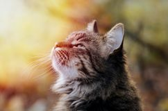 Portrait of Young fluffy gray domestic cat in a sunny forest. Adopted pet. Stock Photography