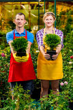 Portrait of young gardeners in a greenhouse with seedlings. Of trees Stock Images
