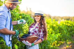 Portrait of a young happy couple in vineyard stock images