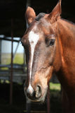 Portrait of a young horse with beautiful eyes Stock Photo