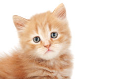 Portrait of young kitten Stock Photos