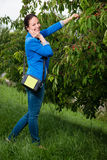 Portrait of young lady picking cherries Royalty Free Stock Image