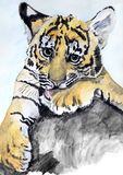 Portrait young lion, watercolor drawing Stock Image