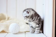 Portrait of young little kitten Stock Image