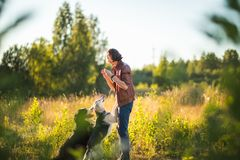 Portrait of a young man walking with two dogs Bernese Mountain Dog and shepherd on the summer field. Side view at a young stylish caucasian man with two dogs royalty free stock photo