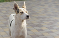 Portrait of young mixed breed positive dog standing on a street Royalty Free Stock Photo